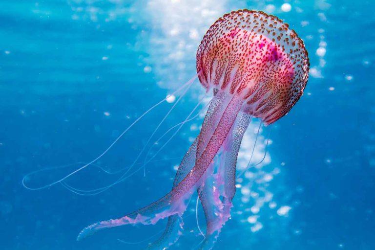 Experiencias reales de picaduras de insectos y medusas
