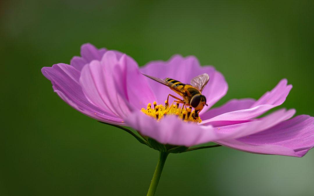 Beneficios de la cera virgen ecológica de abeja para tu piel